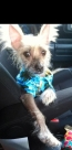 Kynzie in his Hawaiian shirt!